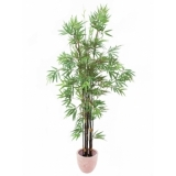 EUROPALMS Bamboo black trunk, 210cm