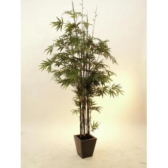 EUROPALMS Bamboo black trunk, 240cm #2