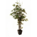 EUROPALMS Bamboo black trunk, 240cm