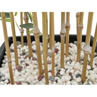 EUROPALMS Bamboo in Bowl, 150cm #3