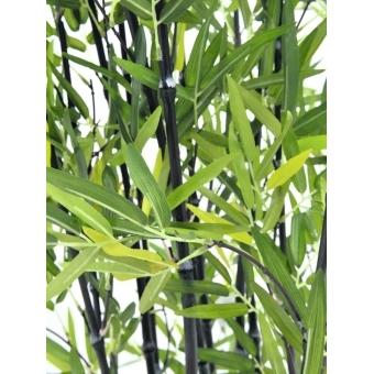 EUROPALMS Bamboo in Bowl, 180cm #2