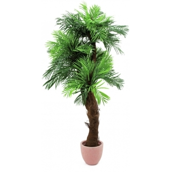 EUROPALMS Areca palm with palm fiber trunk, 170cm #4