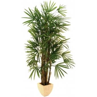 EUROPALMS Lady palm, 150cm