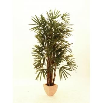 EUROPALMS Lady palm, 150cm #2