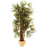 EUROPALMS Lady Palm, 180cm
