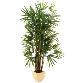 EUROPALMS Lady Palm, 210cm