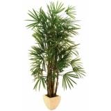 EUROPALMS Lady Palm, 210cm