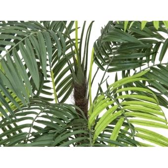 EUROPALMS Areca palm, 110cm #2