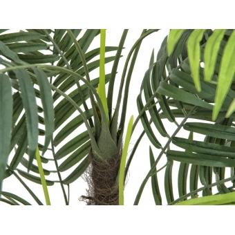 EUROPALMS Areca palm, 110cm #3