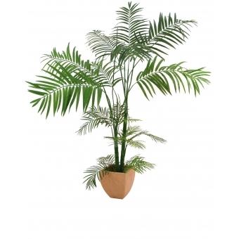 EUROPALMS Areca palm, multitrunk, 170cm