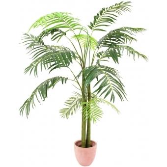EUROPALMS Areca Palm, 3 trunks, 210cm