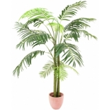 EUROPALMS Areca Palm, 3 trunks, 210cm