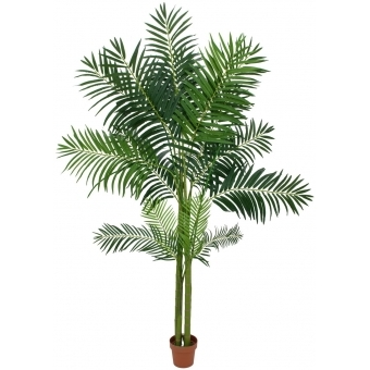 EUROPALMS Areca Palm, 4 trunks, 240cm