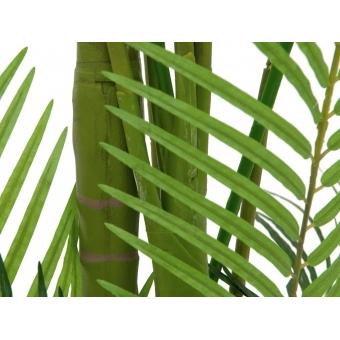 EUROPALMS Areca Palm, 4 trunks, 240cm #2