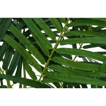 EUROPALMS Areca Palm, 4 trunks, 240cm #3