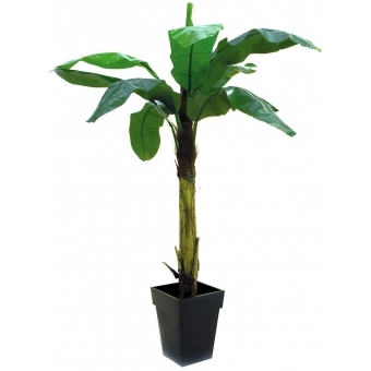 EUROPALMS Banana tree, 220cm #3