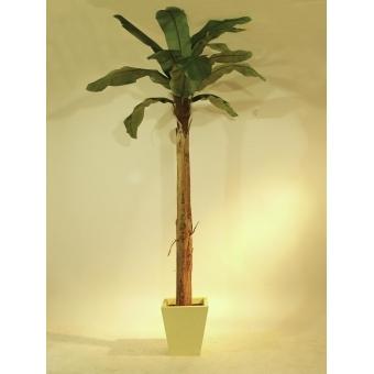 EUROPALMS Banana tree, 270cm #2
