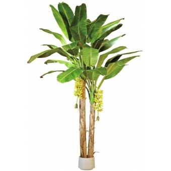 EUROPALMS Banana tree, 440cm #7