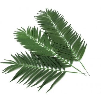 EUROPALMS Coconut Palm Branch 110cm 12x #3