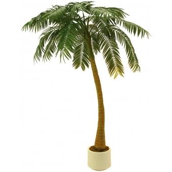 EUROPALMS Palm, 1 trunk, 300cm