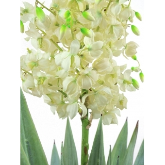 EUROPALMS Yucca palm with blossoms, 222cm #2