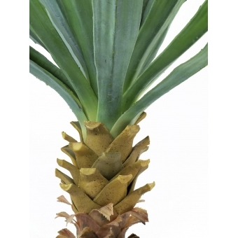EUROPALMS Yucca palm with blossoms, 222cm #3