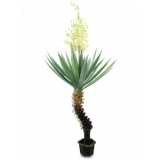 EUROPALMS Yucca palm with blossoms, 222cm