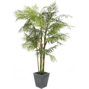 EUROPALMS Cycas Tube Palm, 280cm