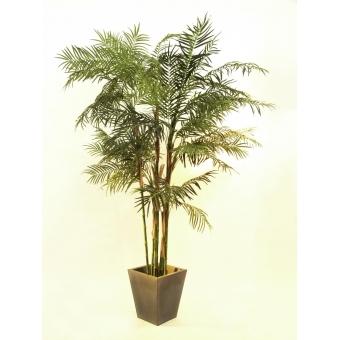 EUROPALMS Cycas Tube Palm, 280cm #2