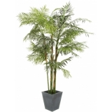 EUROPALMS Cycus Tube Palm, 280cm