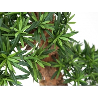 EUROPALMS Bonsai tree, 180cm #2