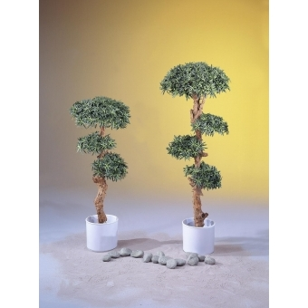 EUROPALMS Bonsai tree, 180cm #4