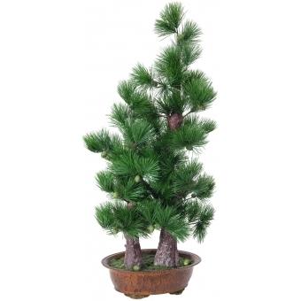 EUROPALMS Pine bonsai, 95cm
