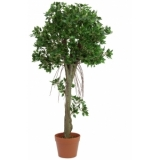 EUROPALMS Ficus ball tree, 100cm