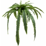 EUROPALMS Boston fern giant version, 140cm