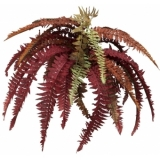 EUROPALMS Boston fern, red, 80cm