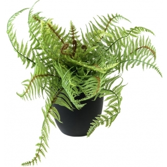 EUROPALMS Boston fern, deluxe, 37cm