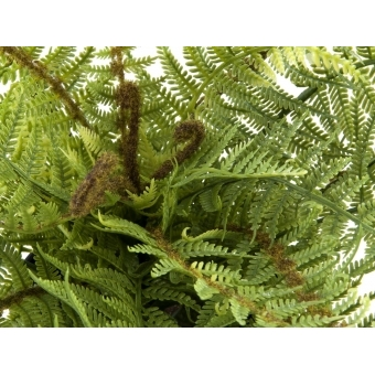 EUROPALMS Boston fern, deluxe, 37cm #2