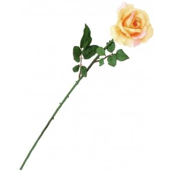 EUROPALMS Rose, creme