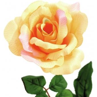 EUROPALMS Rose, creme #2