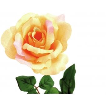 EUROPALMS Rose, creme #3