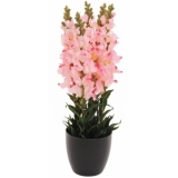 EUROPALMS Antirrhinum, rose, 65cm
