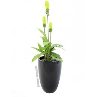 EUROPALMS Ginger lily, 95cm #2