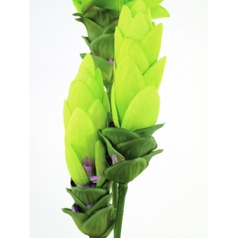 EUROPALMS Ginger lily, 95cm #3