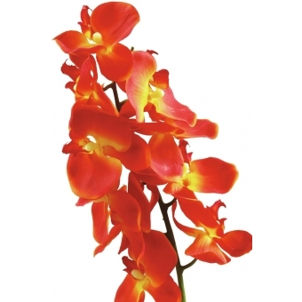 EUROPALMS Orchid spray, orange, 70cm #2