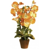 EUROPALMS Orchid, orange, 57cm