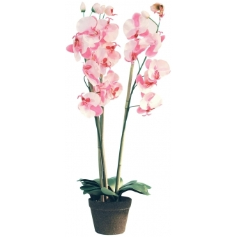 EUROPALMS Orchid, rose, 80cm