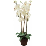 EUROPALMS Orchid, white, 80cm