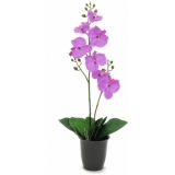 EUROPALMS Orchid, purple, 57cm