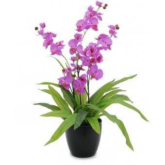 EUROPALMS Orchid, purple, 80cm